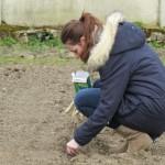 semis de haricot lors d'un atelier jardinage au naturel