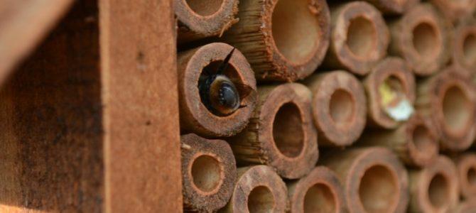 Les abeilles, nos alliées