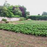 jardin Verquin vue panoramique