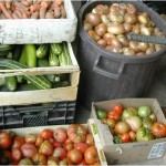 Vente de légumes de saison