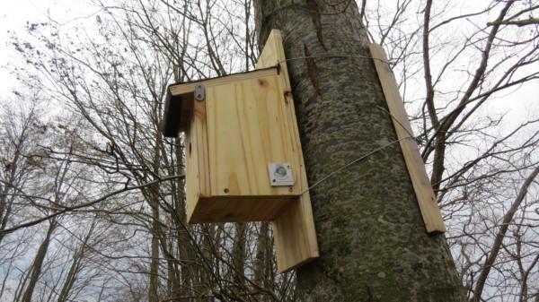 Les oiseaux à l'honneur au lycée professionnel de l'Artois à Nœux-les-Mines